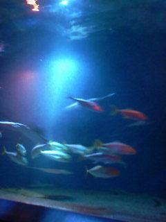 2008-11-19.jpg